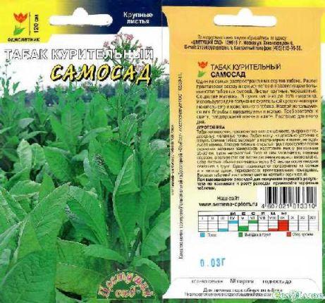 Выращивание табака в средней полосе россии 29