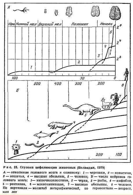 ...Ф. Энгельс отмечал как естественноисторическую закономерность ускорение темпов развития органического мира в...